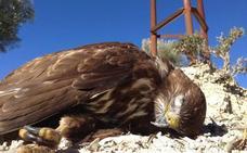 Más de 1.600 kilómetros de tendidos eléctricos son peligrosos para las aves