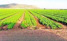 La Fiscalía investiga la transformación de 2.000 hectáreas a regadío en el Noroeste
