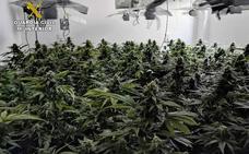 Detenido en Cieza por malos tratos, cultivar marihuana y defraudar fluido eléctrico