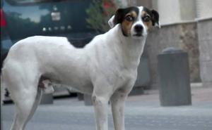 El 'Perro Antonio', un vecino más de Alquerías