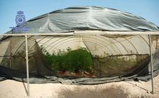 La Policía Nacional de Lorca desmantela una plantación de marihuana en Almería