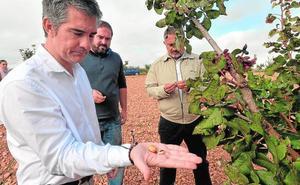 El pistacho ecológico gana hectáreas