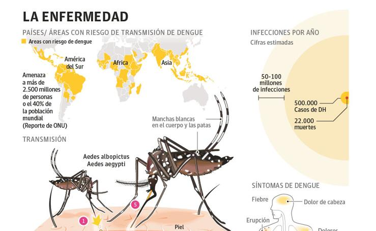 Dengue: transmisión, síntomas y áreas con riesgo