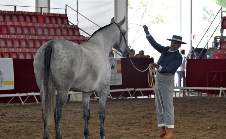 Inauguración de la Feria del Caballo de Lorca