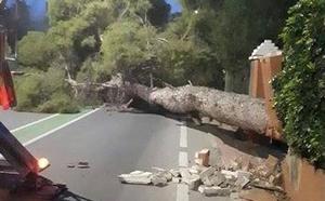 Un pino centenario se desploma en La Alberca, causando daños en una vivienda