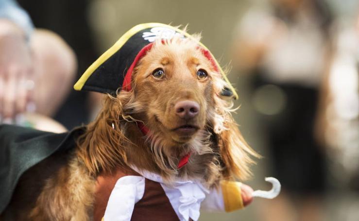 Tradicional carrera de perros