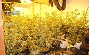 Desmantelan un cultivo ilegal de más de un centenar de plantas de marihuana en Cehegín