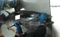 La trama del atún rojo que implica a Ricardo Fuentes ganó 25 millones de euros en un año