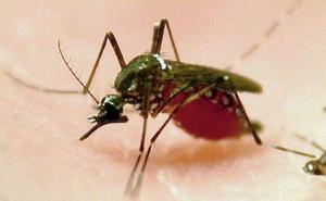 Confirman el tercer caso de dengue contagiado en España