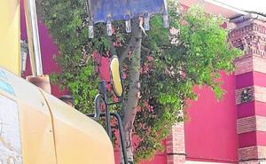 La tala de árboles para remodelar el centro de San Pedro despierta las quejas vecinales