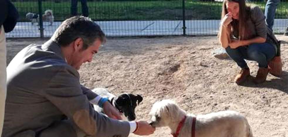 Incertidumbre en los ayuntamientos ante la ley que prohíbe sacrificar animales de compañía
