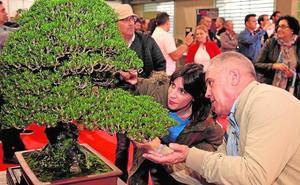 Los bonsáis se adueñan del centro de ferias
