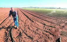 La falta de agua obliga a los agricultores a reducir un tercio la producción de invierno