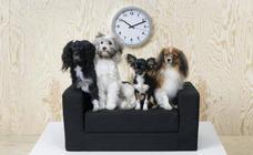 La novedad de Ikea para perros y gatos que te encantará si tienes mascota