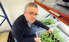 Científicos españoles descubren cómo cultivar plantas más resistentes a la sequía