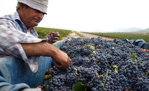 Los viticultores recibirán ayudas de más de 1,3 millones el próximo año
