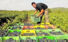 La exportación de vinos repunta con los pedidos de Portugal y Francia