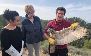 Medio Ambiente libera un búho real que quedó enredado con una cometa espantapájaros
