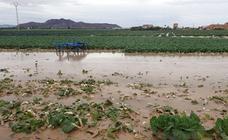 Las inundaciones en Cartagena disminuirán la recolecta de productos hortofrutícolas para Navidad