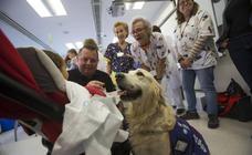La Consejería de Salud pone en marcha terapias con perros