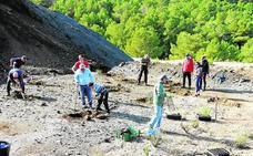 Reforestan con cipreses el acceso al Parque Regional de Calblanque
