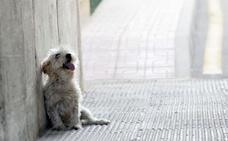 La perrera municipal cobrará cien euros a dueños de animales que recoja en la calle