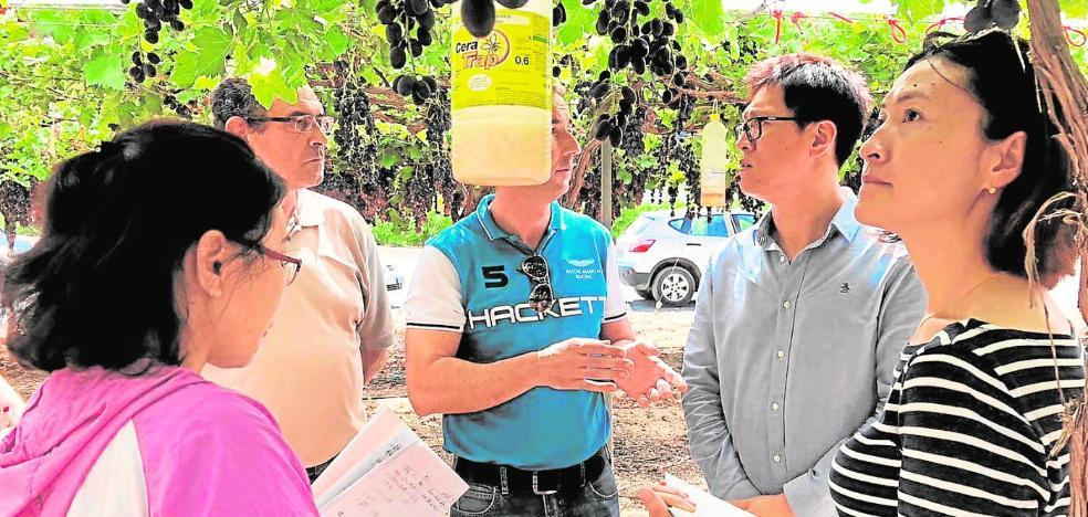 Veinticinco empresas murcianas venderán a China uva de mesa y porcino sin límites