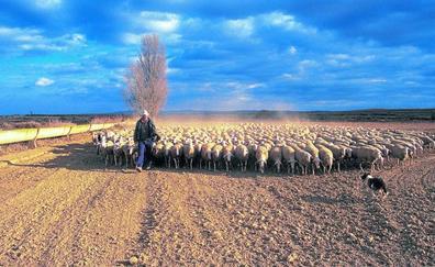 Pastores contra el olvido