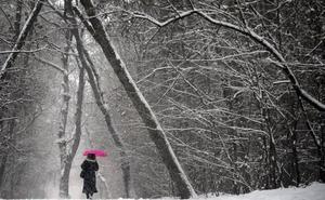 La disminución de las nevadas reduce la absorción del C02 por los bosques