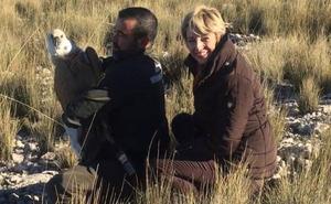 Liberan a un buitre leonado en Sierra Espuña