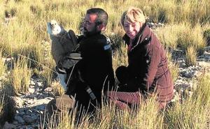 Liberan un buitre leonado en Sierra Espuña