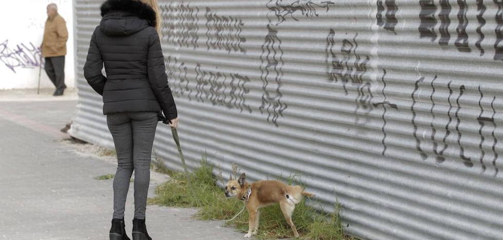 Lorca anuncia más multas a los dueños de perros que ensucien la vía pública