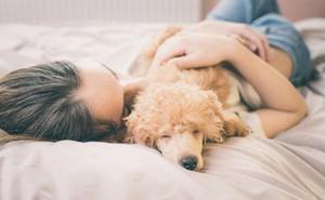 ¿Es bueno dormir con tu perro? Más de lo que te imaginas