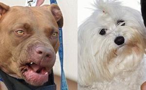 Heridos los dueños de dos perros al tratar de separarlos mientras se peleaban