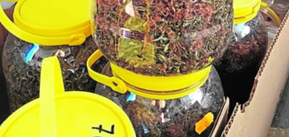 Un 'vuelco' frustrado de marihuana se salda con el arresto de un empresario de Cehegín