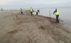 Retiran 267 m3 de cañas y algas del Mar Menor en las últimas tres semanas