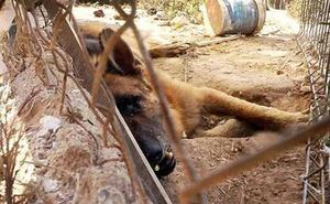 Podemos exige al Gobierno Regional el desarrollo inmediato de la Ley de Bienestar Animal