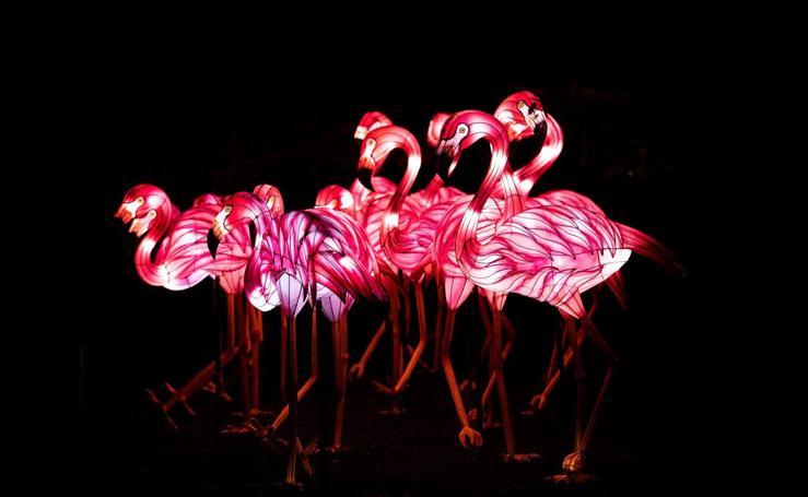 Luz contra la extinción