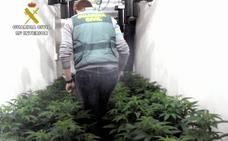 La Guardia Civil desmantela un invernadero clandestino con medio centenar de plantas de marihuana