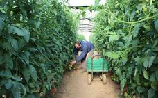 Los chalecos amarillos y la «competencia desleal» lastran la campaña hortofrutícola en Águilas