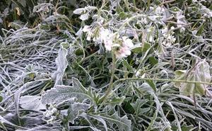 La madrugada deja helada a buena parte de la Región con mínimas de hasta 8 grados bajo cero