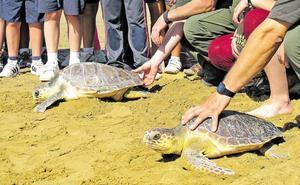 Las tortugas bobas liberadas tras ser tratadas en El Valle llegan a Sicilia, Marruecos y Túnez