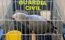 La Guardia Civil recupera un loro desaparecido del domicilio de sus dueños en Las Torres de Cotillas
