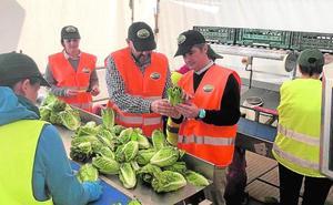 Las plataformas hortícolas recolectan el 40% de la producción de la Región