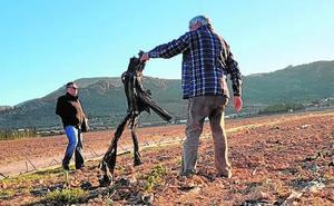 Denuncian coacciones de empleados de una finca de Yecla a un ecologista que hacía fotos
