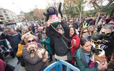 El patrón de los animales reparte su bendición en Murcia