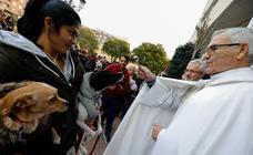 Las mascotas de Molina reciben la bendición de San Antón