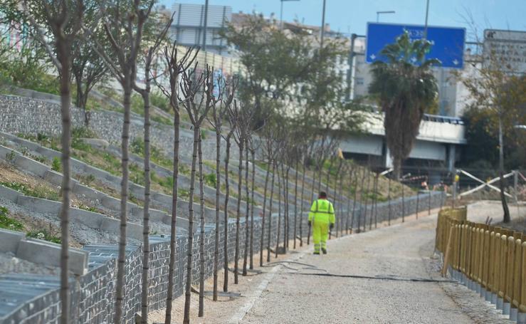 Cinco asociaciones reforestarán 200 hectáreas de terrenos en Murcia