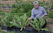 Convocan el I Congreso Científico Escolar sobre Sostenibilidad Alimentaria