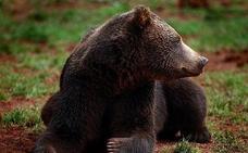 Un niño perdido en el bosque dos días dice que un oso estuvo cuidando de él